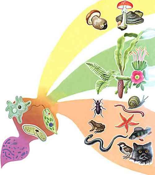 Картинка царства живой природы для детей